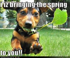 Funny Spring Pictures | Daily Thread...Terrific Tuesday! 3/20/12 (page 2)