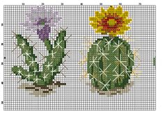 kaktusy 1