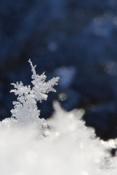 Macro Monday meets winter.