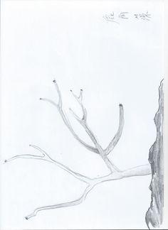 Sketch_Kelp27