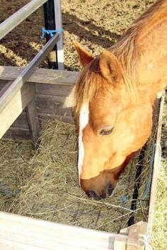 Feeding Advice from Natural Horse World
