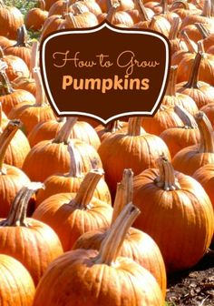 How To Grow Pumpkins   It's Time To Plant! - Moms Need To Know ™