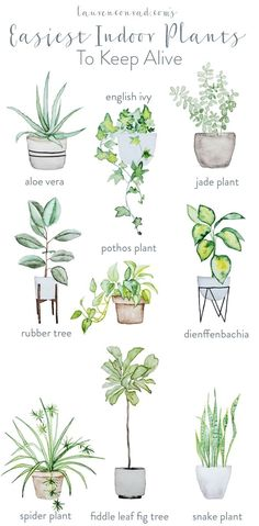 For those without green fingers who struggle to keep a plant alive, try this