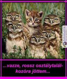 Funny animal pictures with an assortment of animals. Funny animal pictures with captions. Baby Animals, Funny Animals, Cute Animals, Baby Owls, Animals Images, Cute Kittens, Cats And Kittens, Cats Bus, Crazy Cat Lady