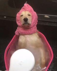 Dog memes funny, funny animal memes, funny memes, funny dog pictures, dog m Cute Funny Animals, Cute Baby Animals, Funny Cute, Funny Dogs, Animals And Pets, Wild Animals, Cute Puppies, Cute Dogs, Cute Babies