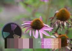 Beverly Ash Gilbert: Color Inspiration - Faded Coneflowers