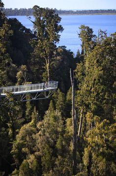 West Coast Treetop Walk, Just out of Hokitika, South Island, New Zealand