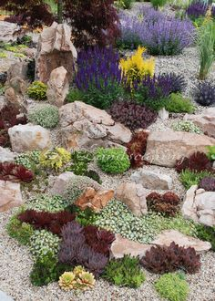 Succulent rock garden with Chick Charms & Sunsparkler Sedums – www.n… - Garden Diy - Succulent rock garden with Chick Charms & Sunsparkler Sedums www.n Succulent rock gar - Succulent Rock Garden, Rock Garden Plants, Succulent Landscaping, Succulents Garden, Garden Types, Garden Planters, Herb Garden, Small Front Yard Landscaping, Landscaping With Rocks