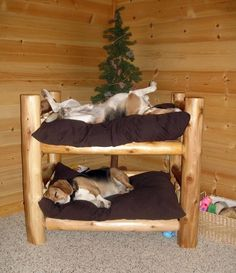 Okay so I should just get a set of twin bunk beds for my pups..