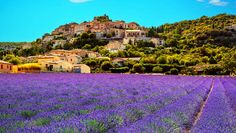 Provence, France http://www.rodalesorganiclife.com/garden/the-8-prettiest-places-in-the-world-to-see-flowers-in-full-bloom/provence-france