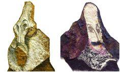 Cervantes y Shakespeare: ni se conocieron, ni se copiaron, ni murieron el mismo día:  http://cultura.elpais.com/cultura/2008/04/22/actualidad/1208815215_850215.html