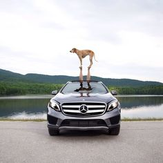 For #NationalDogDay, go for a drive with man's best friend.  #MBphotocredit @thiswildidea  #Mercedes #Benz #GLA #GLA250 #SUV #instacar #carsofinstagram #germancars #luxury #MBsummer #carsanddogs #GLApacked