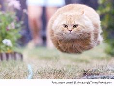 Hovercat is on its way.....