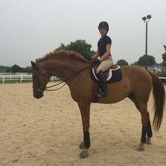 The Lesbian Equestrian