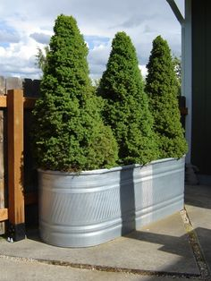 Learn all the ways you can hack large galvanized stock tanks and troughs to create something spectacular and useful for your home. Privacy Fence Landscaping, Large Backyard Landscaping, Privacy Fence Designs, Backyard Privacy, Privacy Fences, Backyard Fences, Landscaping Ideas, Backyard Ideas, Backyard Planters