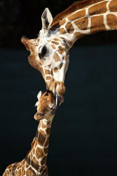 Baby Giraffe says : Aww come on Mom!