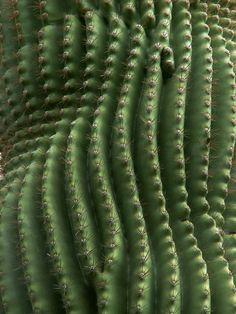 détail d'un cactus