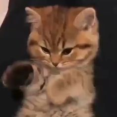 Cuteness Overloaded The post Cuteness Overloaded appeared first on Animal Bigram Ideen. Cute Cats And Kittens, I Love Cats, Crazy Cats, Kittens Cutest, Cute Funny Animals, Cute Baby Animals, Funny Cute, Cute Puppies, Cute Dogs