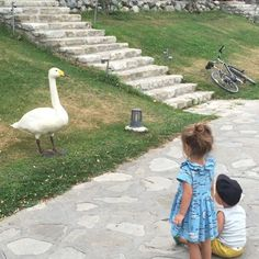 to Discussion On Tsarina Swan ~  Rare GIF > view the source * _ In general, we often see different animals and birds, but sometimes a reaction like this, about 20 minutes she was someone else 'ogroooomny Swan', and my grandmother 'all gone'..._ August 12-2015.