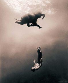 Elefant schwerelos