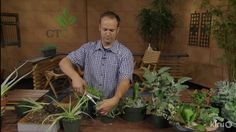Dividing succulents|East Austin Succulents|Central Texas Gardener