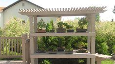 My bonsai display