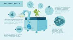 """Des scientifiques péruviens ont imaginé un système autonome et durable capable de capter l'énergie de la photosynthèse d'une plante pour ainsi créer de l'électricité. Un modèle nommé """"Plantalámpara"""" permet désormais d'apporter la lumière aux populations rurales vivantes dans la forêt amazonienne."""