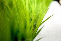 Nature - Personal @ronaldoichi Portraits @ronaldoichiphotography - #nature #natureza #naturephotography #photography #fotografia #plants #garden #vsco #ronaldoichi #vscofilm #instagramers #摄影 #色彩 #カメラマン #フォトグラフィー #写真 #自然 #植物 #nature2017