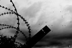 Σκέψεις: Να πετούσαμε πάνω από σύνορα, Τάσος Ορφανίδης