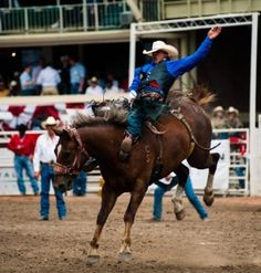 Calgary Stampede Rodeo is a huge annual must-attend event in Calgary, Alberta. Horses, broncos, equestrian races.