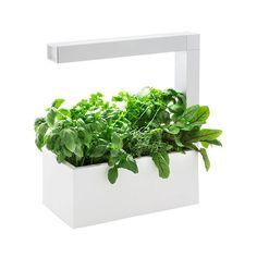 MONOQI | Herbie Indoor-Garten - Weiß