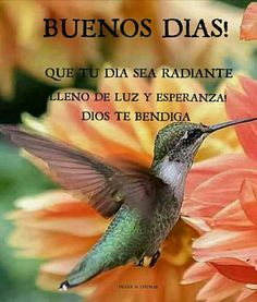 Buenos días Morning Thoughts, Good Morning Messages, Good Morning Good Night, Morning Wish, Good Morning Quotes, Motivational Phrases, Inspirational Quotes, Frases Dela, Good Day Wishes