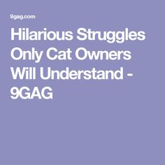 Hilarious Struggles Only Cat Owners Will Understand Hilarious - Hilarious cat owners struggles