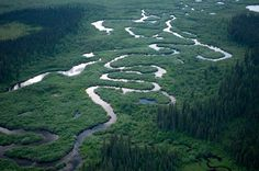 great bear-rainforest-is one of the largest tracks of unspoiled temperate rainforests left on the planet