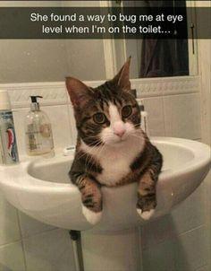 23 Animal Memes