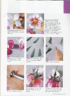 Visita la entrada para saber más Blog, Plants, Magazines, China, Miniatures, Roses, Flowers, Manualidades, Entryway
