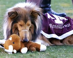 Reveille VII with t.u. longhorn chew toy!