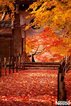 画像B: 紅葉の絨毯。足を踏み入れるのが心苦しいくらいきれい。 Japanese Landscape, Japanese Architecture, All Nature, Amazing Nature, Aesthetic Japan, Autumn Scenes, Kyoto Japan, Photography Backdrops, Photo Backgrounds