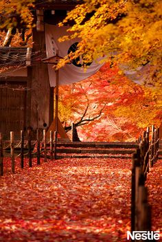 画像B: 紅葉の絨毯。足を踏み入れるのが心苦しいくらいきれい。