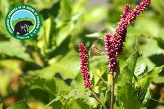 La flora de Sierra Picachos es vital para el desarrollo sustentable de la región, ya que cuenta con la calidad suficiente para ser un producto de exportación y ser la materia prima de otros productos que benefician a toda la región de Higueras.