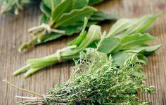 Kouzelné bylinky - Přírodní prostředky pro nachlazení a chřipku