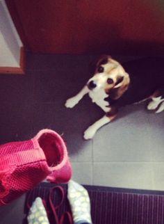 article sur une beagle - dolly - chien - chiot - adorable - mignon - chou - bébé - promenade - doudoune - fillette - blog - blogueuse - Allemagne