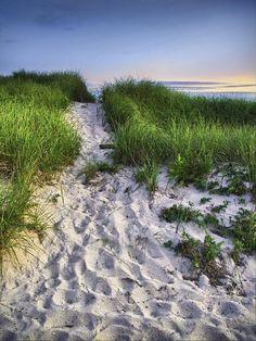 Wellfleet Beach Path ~ Cape Cod, MA. Cape cod is one of my facorate beaches around here