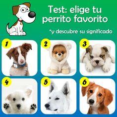 DE TODO UN POCO: El test de los perritos.
