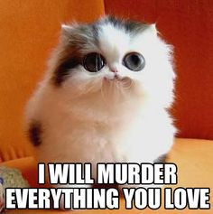 The cutest little threat…