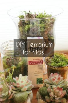 How to make a terrarium: Earth Day craft - The Dwelling Tree. #NaturalGoodness #ad