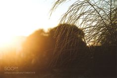 amanhecer by patriciamarques