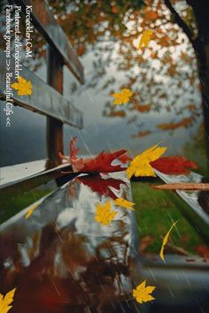 Fall Pictures, Nature Pictures, Fall Flowers, Flowers Nature, Animated Love Images, Rain Gif, Rain Wallpapers, I Love Rain, Glitter Gif