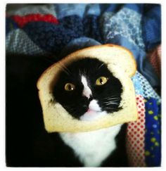 I feel like this is something my cat would do haha