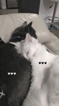 Cute Baby Cats, Cute Little Animals, Cute Funny Animals, Kittens Cutest, Cats And Kittens, Funny Cats, Persian Kittens, Cute Cat Wallpaper, Cat Aesthetic